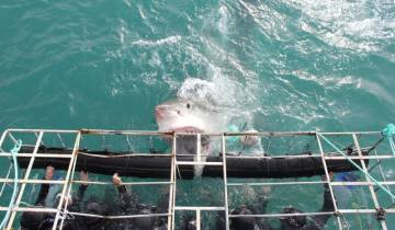 Cape Town Great White Shark Adventure (4 days) Tour