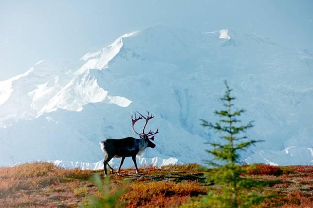 Alaska tours for singles
