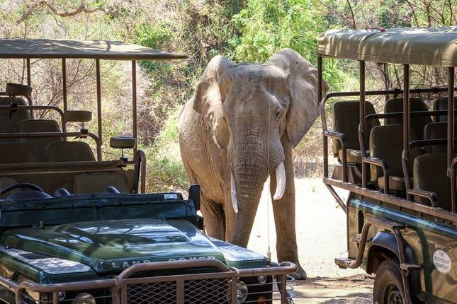 10 Best Zambia Tours Vacation Packages 2020 2021 Tourradar