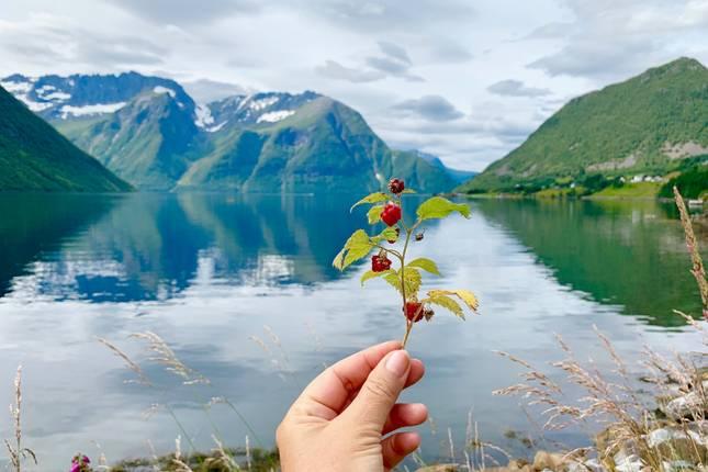 singel i fjord