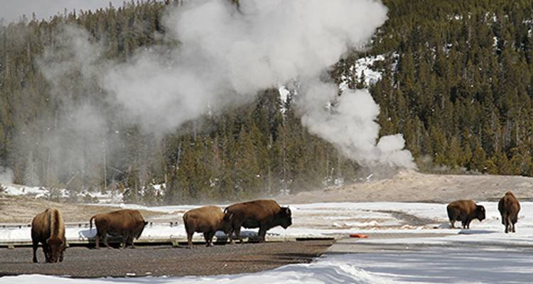 Winter in Yellowstone  (Jackson Hole, WY to Jackson Hole, WY) - Collette