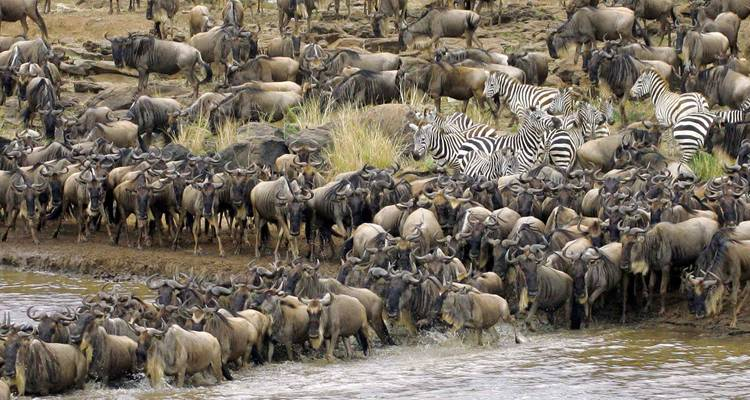 East Africa Migration Safari: Limited Edition - Peregrine Adventures