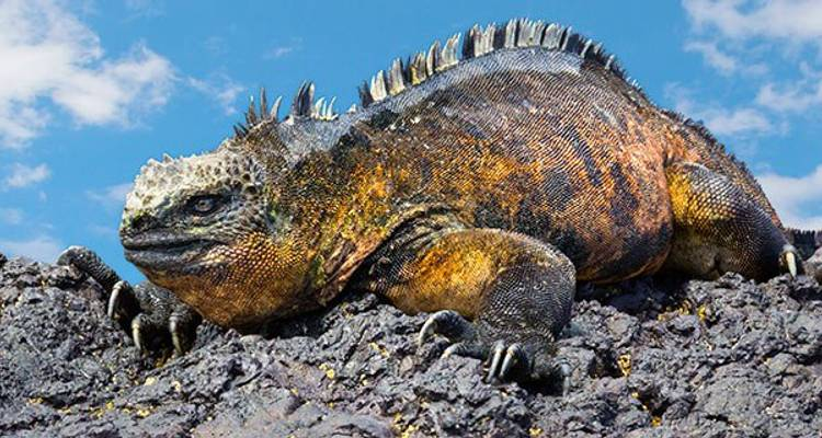 7 Day Galapagos Budget Island Hopping - Rebecca Adventure Travel