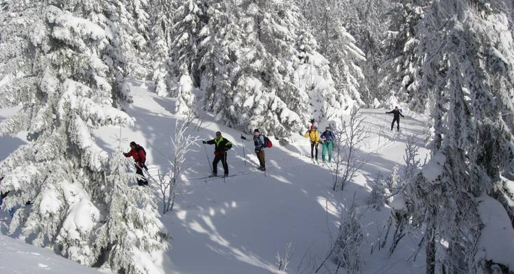 Black Forest Cross-country Ski Tour