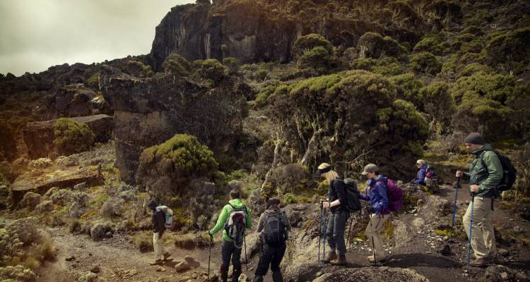 Mt Kilimanjaro Trek - Machame Route (8 Days) - G Adventures
