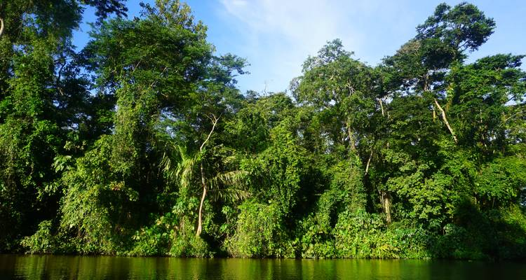 Tortuguero: A natural paradise in Costa Rica - Green World Adventures