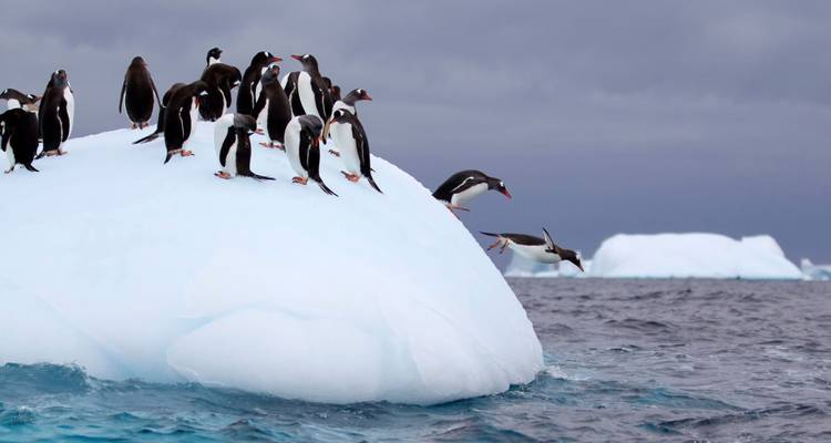 Special Antarctica Photographic Charter with Paul Goldstein, Mark Carwardine & Chris Packham - Exodus Travels