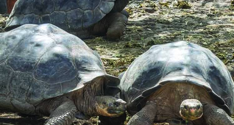 Classic Galapagos - Central Eastern Islands (Grand Queen Beatriz) - Intrepid Travel
