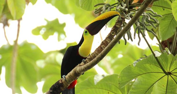 Exotic Costa Rica - Destination Services Costa Rica