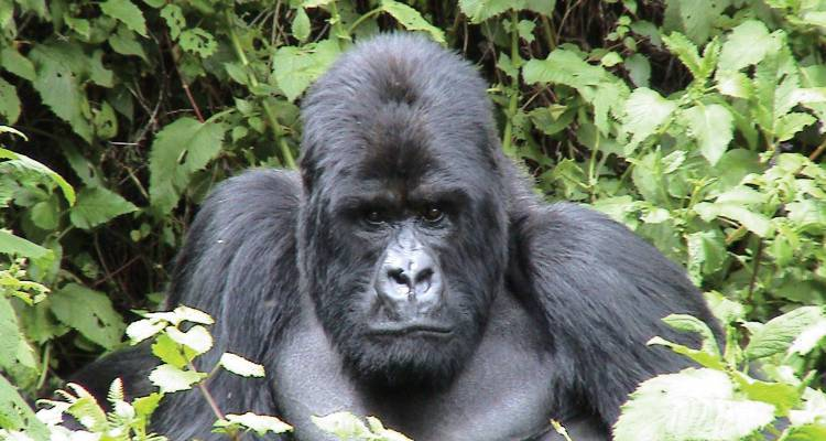 Gorilla Trek & Tanzania Northbound - 25 days - On The Go Tours