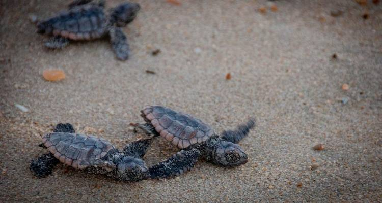 Costa Rica – The Sea Turtle Initiative (Caribbean Coast) - Discover Corps