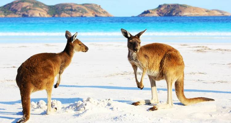 Australia – Beachside Wildlife Adventure - Discover Corps
