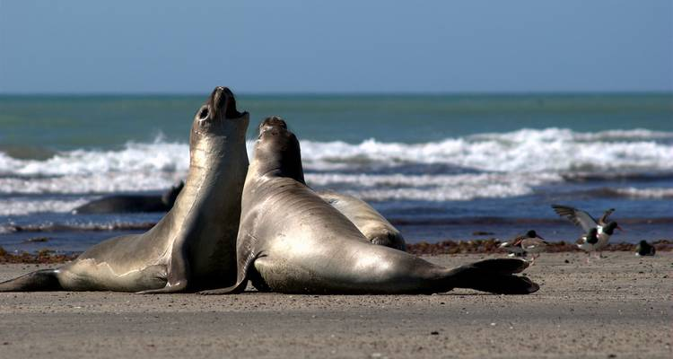 Puerto Madryn - 2 nights - Milhouse Hostel Tours