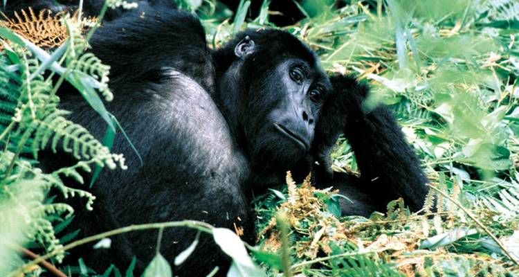 Troop to the Gorillas 9 Days - Acacia Adventure Holidays