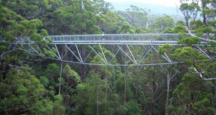 Full Day Valley of the Giants Tree Top Walk - ADAMS Pinnacle Tours