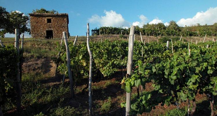 Istrian wine roads short tour - 5 days - Fiore Tours