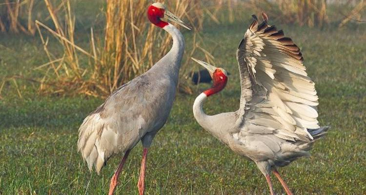 Golden Triangle Tour with Bharatpur - World Travel Experiences