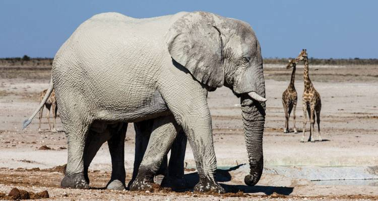 3 Days Etosha National Park (Lodging) - Discovery Transfers and Tours