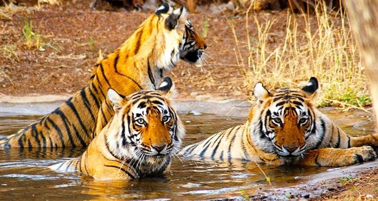 Golden Triangle Tour with Ranthambore from Delhi - Travel Creators Of India