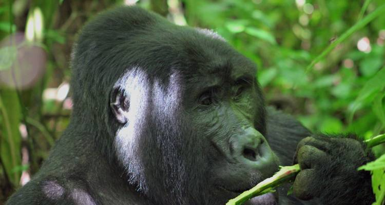Small Group Adventure Holiday - Primate World Safaris (U) Ltd
