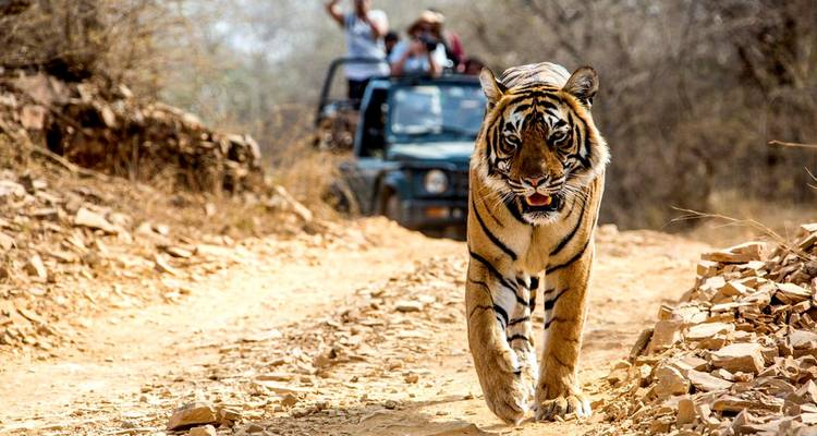For The Love of Taj & Tiger - Golden Triangle With Ranthambore Tour - MTA Destination Experts