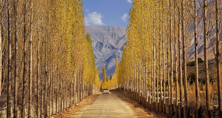 pakistani gilgit trees