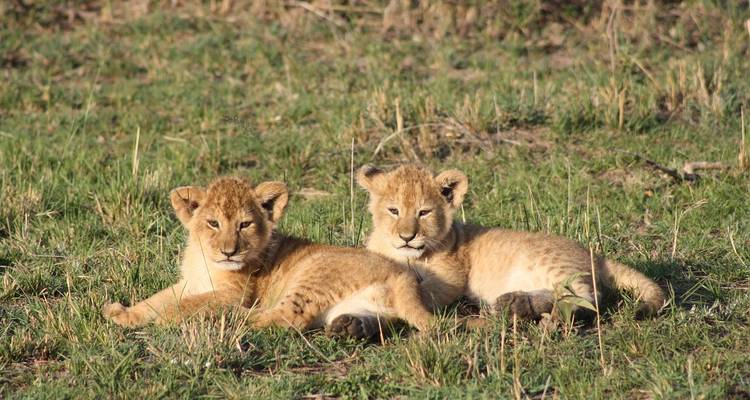 Kenya Private Safari with Maasai Mara Extended Stay - Monograms