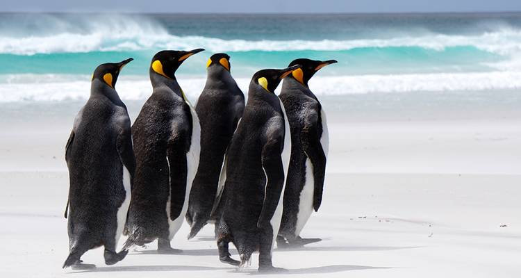 Falkland Islands Expedition: Past & Present  - Intrepid Travel