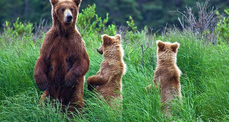Alaska: Ocean Wildlife to Interior Wilderness Adventure - 11 Days - BrushBuck Wildlife Tours