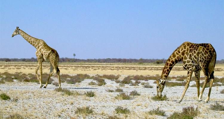 15-Day Namibia Highlights (Accommodated Tour) - Discovery Transfers and Tours