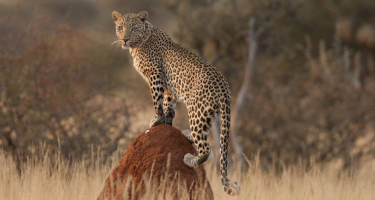 African Adventure Namibia  (Accommodation/Transport & Activities Included) - Junita's Extreme Adventures Namibia cc