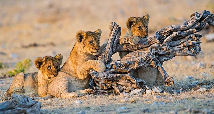 Etosha experience (6 destinations) - Marek safari and tours