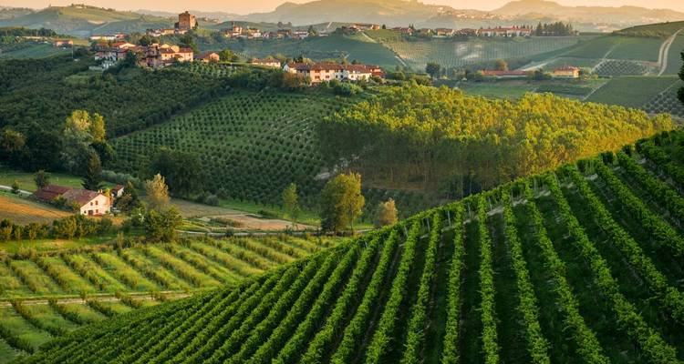 Piedmont vineyards and Ligurian Sea - Road Bike Tours Italy