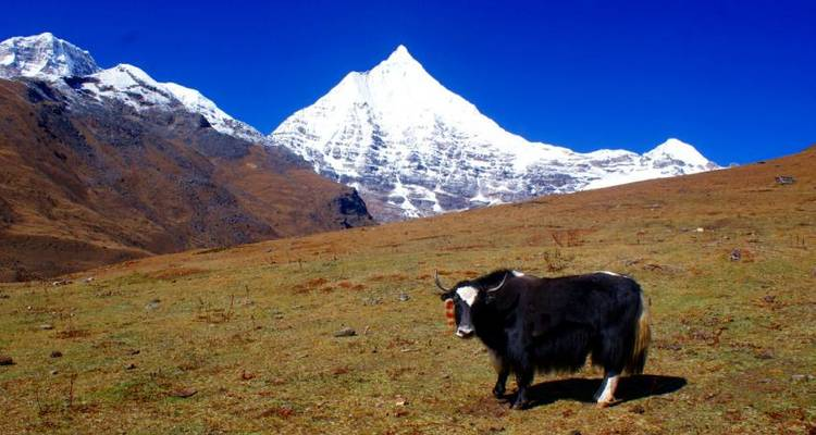 Druk path trek with culture tour - 10 Days - Adventure Himalayan Travels