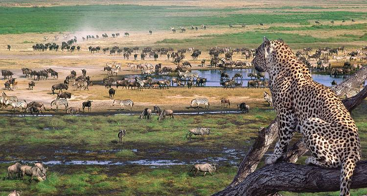 4 Days 3 Nights Serengeti & Ngorongoro Wildlife safari  - Migration Venture Africa