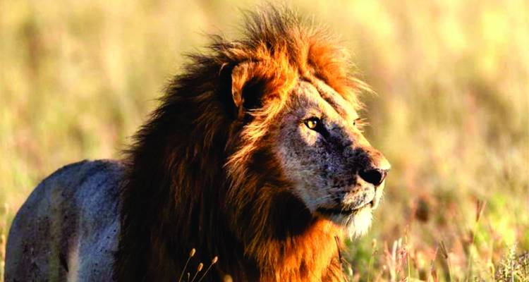 3 Days Masai Mara Safari Tours - Bonvoyage Kenya Safaris