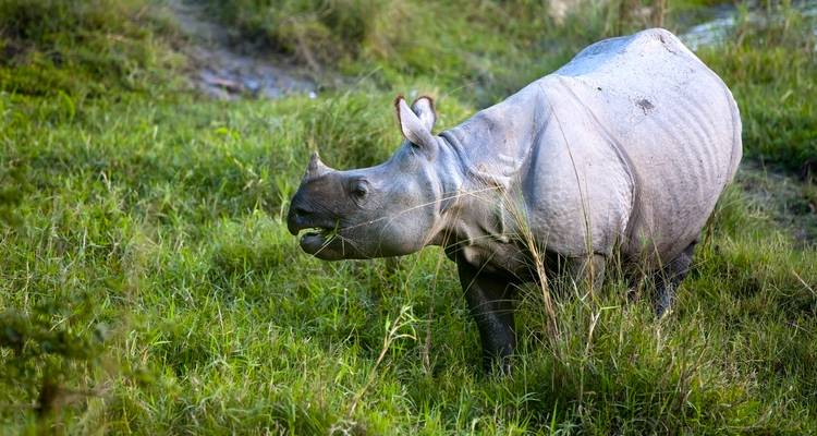Chitwan Independent Adventure and Homestay - G Adventures
