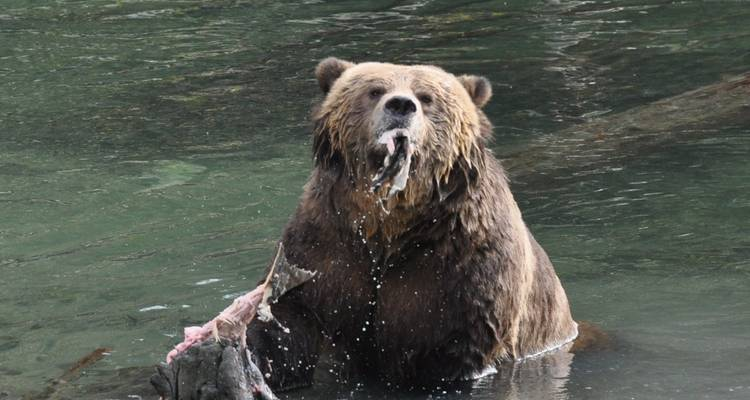 Grizzlies of Toba Inlet - 5 Days  - Pacific Coastal Cruises & Tours