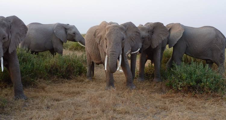 3 days Amboseli National Park Safari - Ole Kirotet Safaris