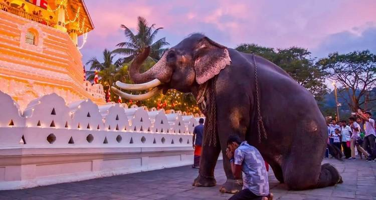 Sri Lankan Heritage  - Amazing Escapes Tours
