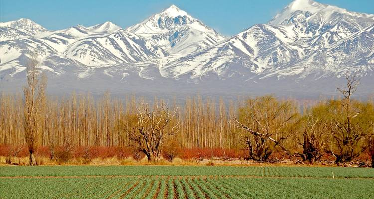 4 -  Days Trip to Mendoza & The Andes - Signature Tours