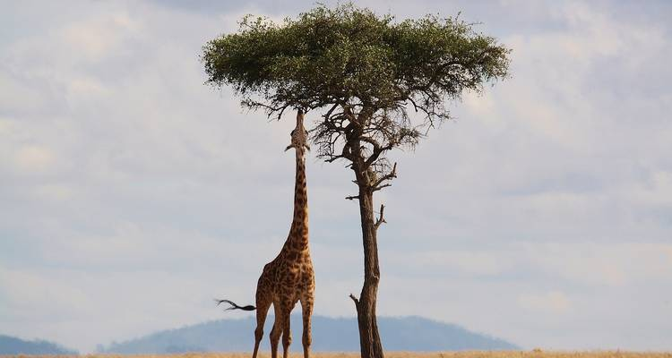 Highlights of Tanzania and Kenya - Evergreen Tours