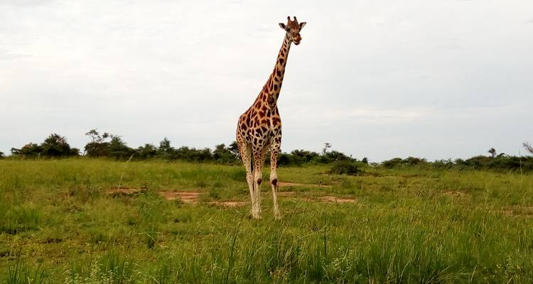 3 Days Murchison Falls NP - Oasis Safaris Limited