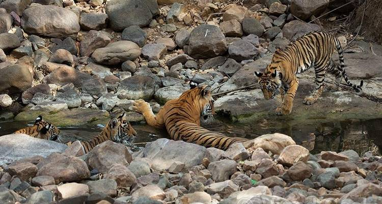 India Wildlife Safari Tour with Taj Mahal   - Golden Triangle Tours Of India