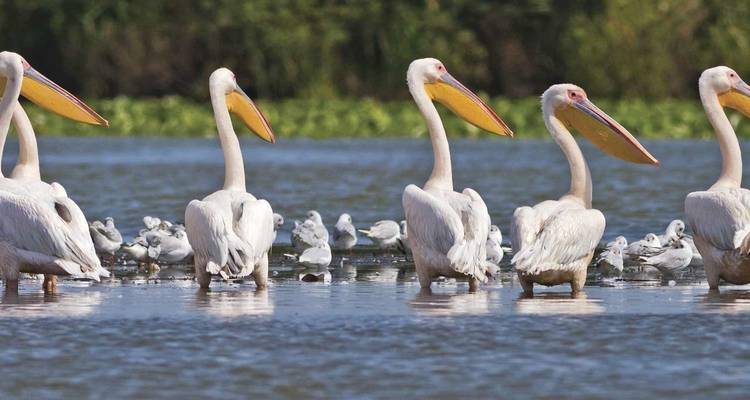 Danube Delta Discovery 2020 (Start Vienna, End Bucharest, 16 Days) - Scenic Luxury Cruises & Tours