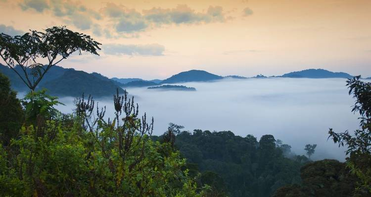 Combined Nyungwe and Akagera National Park - Golden Rwanda Safaris Ltd