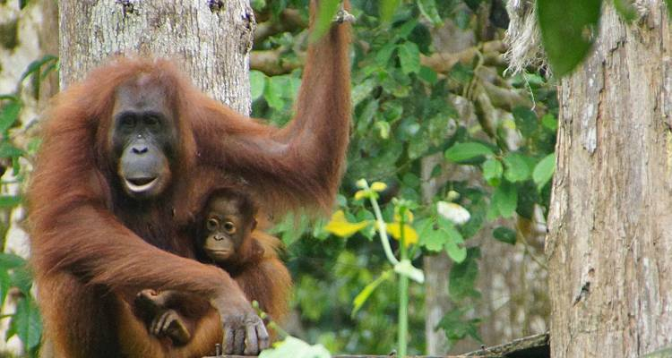 Splendours Of Borneo (KCH - BKI) - Asian Overland Services Tours & Travel