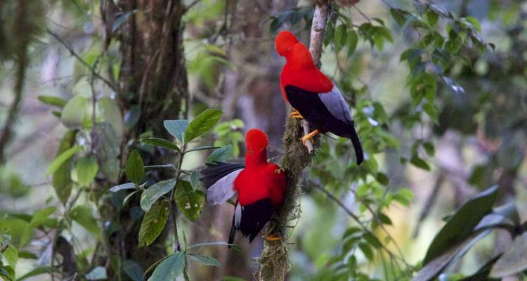 Ecuador | Birding Photographic Northwest and East Slope Private Tour - Dana Tours LLC