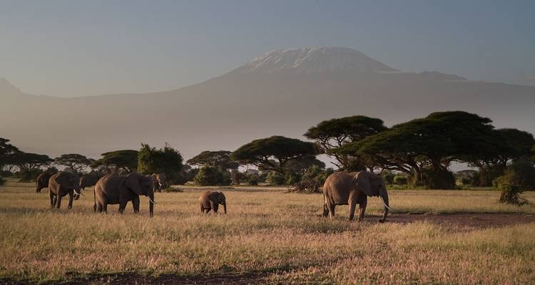 Explore Tanzania Big 5 - 10 Days Safari - Jeep Safaris and Tours