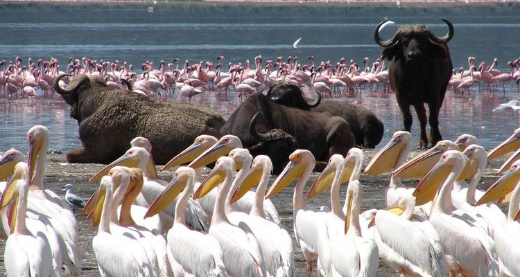 7 Day Majestic Kenya Safari - Holiday Destination Safaris